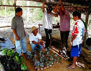 Educadores Agroflorestais no campo