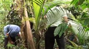 video-agroflorestar-manejo-5-anos